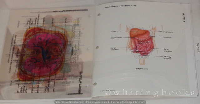 Transparency Acetates For Principles Of Anatomy And Physiology